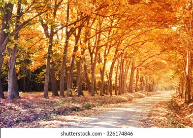 Forest with orange colored trees in autumn