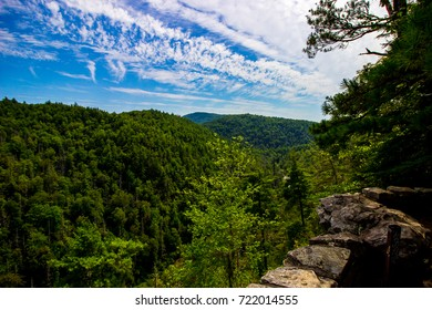 Forest Overlook