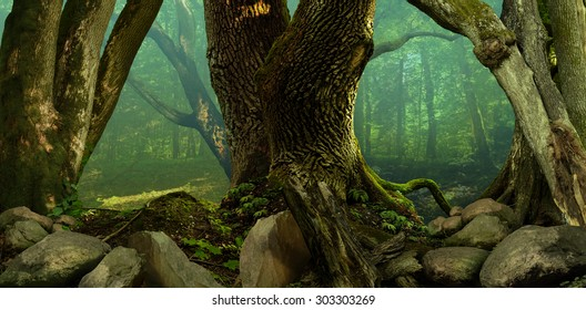 Forest panorama landscape with old mossy crooked trees and rocks