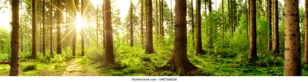 Forest panorama in the light of the morning sun