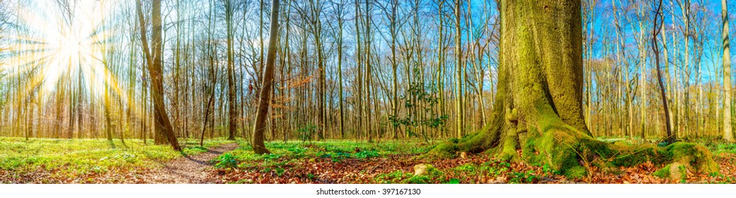 Forest panorama in spring with sun rays