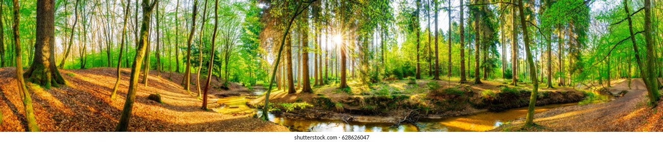 Forest panorama with sun and brook