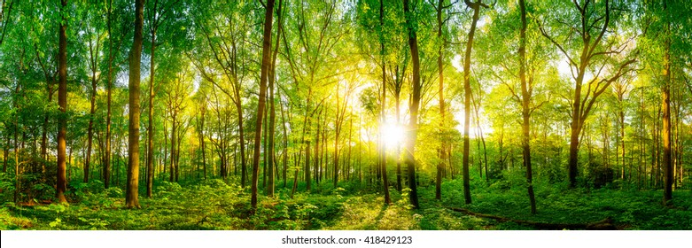 Forest panorama with sunshine