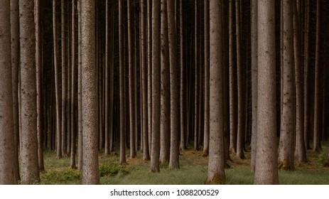 Forest of Parallel Spruce