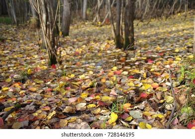 forest, Park , autumn foliage, Surgut, Russia