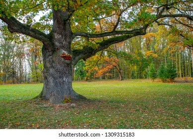 Forest and park with fall leaves in autumn in central Bohemia with old tree