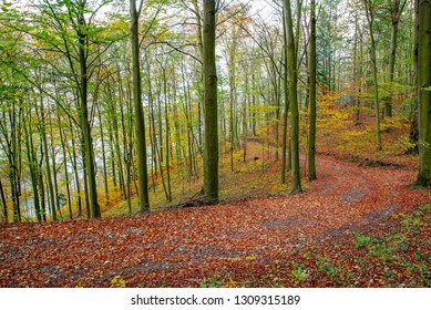 Forest and park with fall leaves in autumn in central Bohemia