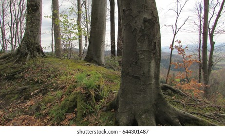 forest patch in carpathian mountains