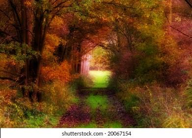 forest path autumn