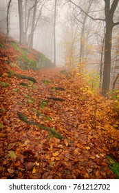 Forest path in the autumn forest