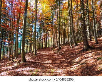Forest path, autumn forest. Beskydy Czech Republic