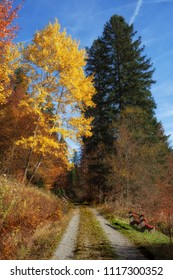 Forest path with bench through sunny autumnal forest with colorful foliage and blue sky