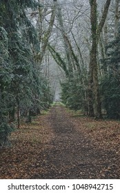 A forest path bordered with trees and leaves.