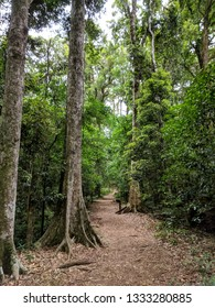 Forest path in the Bunya Mountains