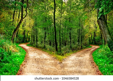 A forest path divides in two different directions