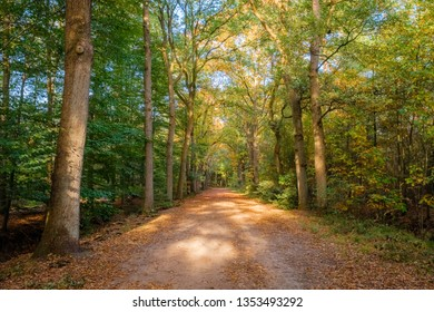 Forest path during sunset on a october afternoon (Almelo, Netherlands). The path lies in the Nijrees forest at the edge of Almelo in the Eastern Netherlands.