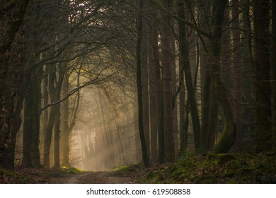 Forest Path in Early Morning Sunshine