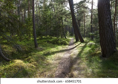 Forest path in european forest on sunny day at spring