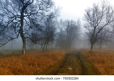 Forest path in the fog
