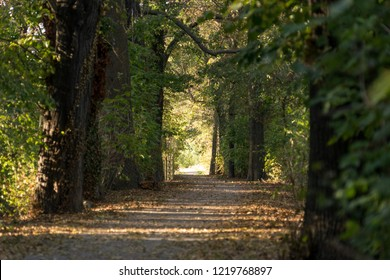 Forest path with foliage in autumn
