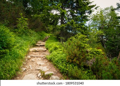 Forest path in the High Tatras National Park