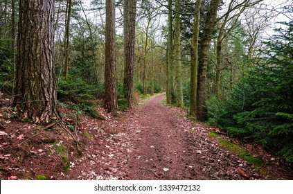 Forest path landscape. Forest dirty road view. Forrest pathway landscape. Forest path landscape