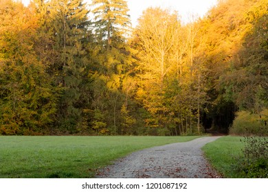 A forest path leads across a clearing into an autumn forest with colorful foliage