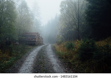 A forest path leads into a dark rainy cloud forest. The roadside tree trunks are stacked. The Harz National Park, Germany