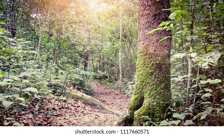 Forest path with moss-covered tree and glowing sunlight