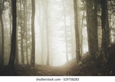 forest path on foggy day