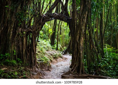 Forest path on the Manoa Falls Trail on the island of Oahu