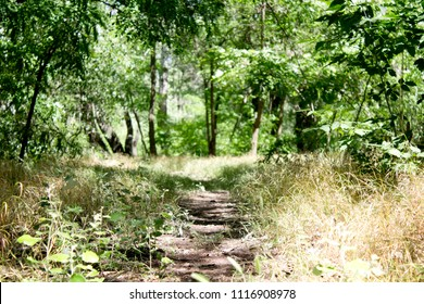 forest path on sunny day