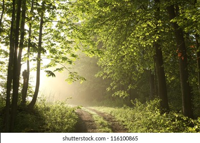 Forest path on a sunny May morning.