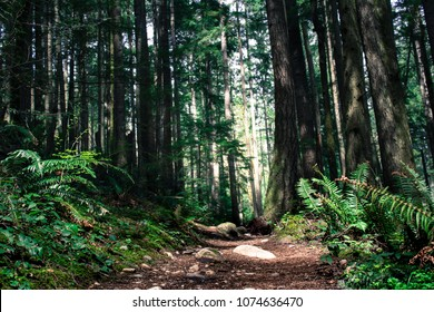 Forest Path on Tiger Mountain in Issaquah, Washington.