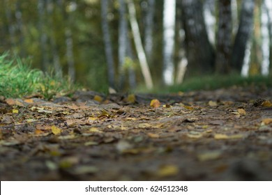 Forest path. Open aperture, shallow depth of field. Blurred foreground and background.