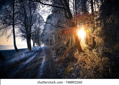 Forest path in sunlight
