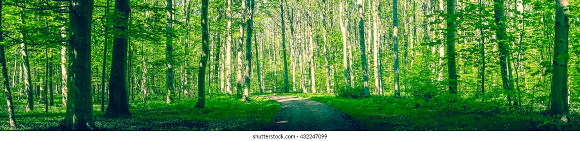 Forest path surrounded by green trees in a panorama scenery