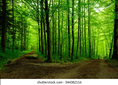 Forest path with two options