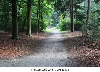 Forest path, Utrechtse heuvelrug