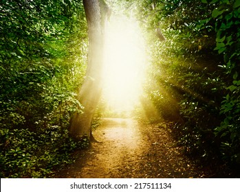 Forest path in the woods