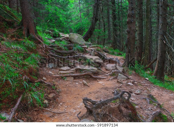 Forest path,fern and grass.