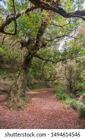 forest pathway among big trees at mountain area of Madeira Island