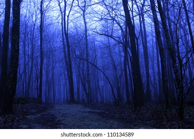 Forest in Pathway Deep Blue Fog