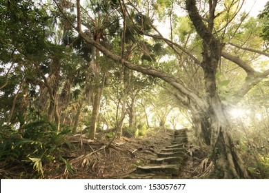 Forest pathway with stoned aged stairs.