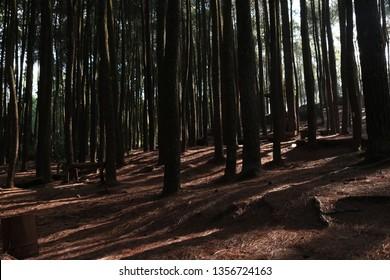 forest pine jungle darkside horor hill mountain