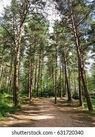 A forest of pines trees with a path at Moors Valley Country Park