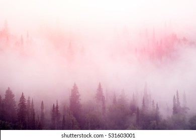 Forest in the pink  mist at sunrise