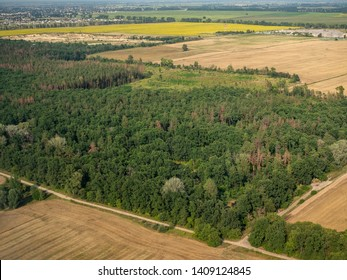 Forest place smaller around the agricultural lands