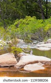 Forest plants near the idyllic Walsh River in Queensland, Australia