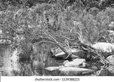 Forest plants near the peaceful Walsh River in Queensland, Australia